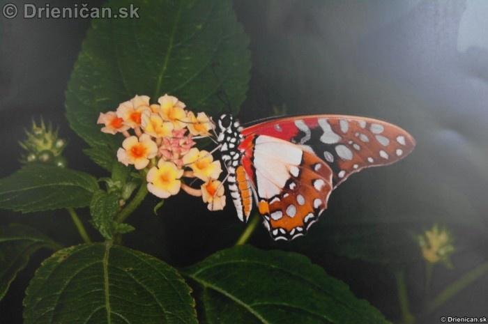 Preparovane motyle zo sveta_82