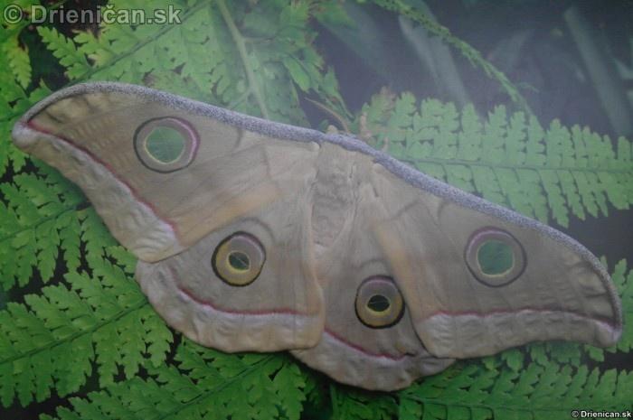 Preparovane motyle zo sveta_86