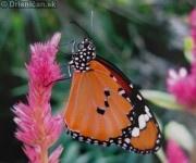 Preparované motýle zo sveta
