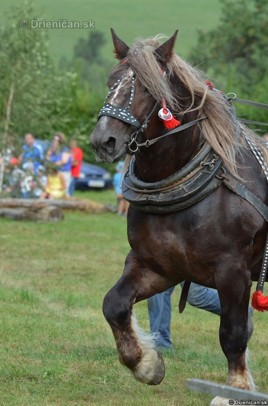 Furmanske preteky Zlaty Kantar Lutina 2012_033