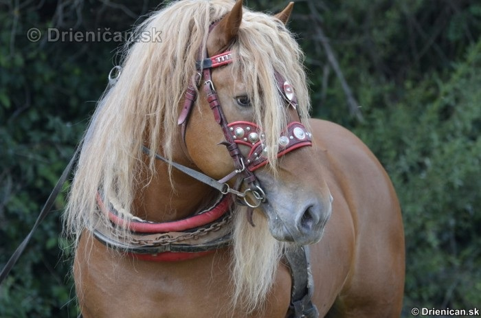 Furmanske preteky Zlaty Kantar Lutina 2012_041