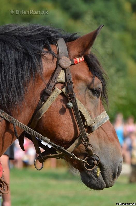 Furmanske preteky Zlaty Kantar Lutina 2012_063
