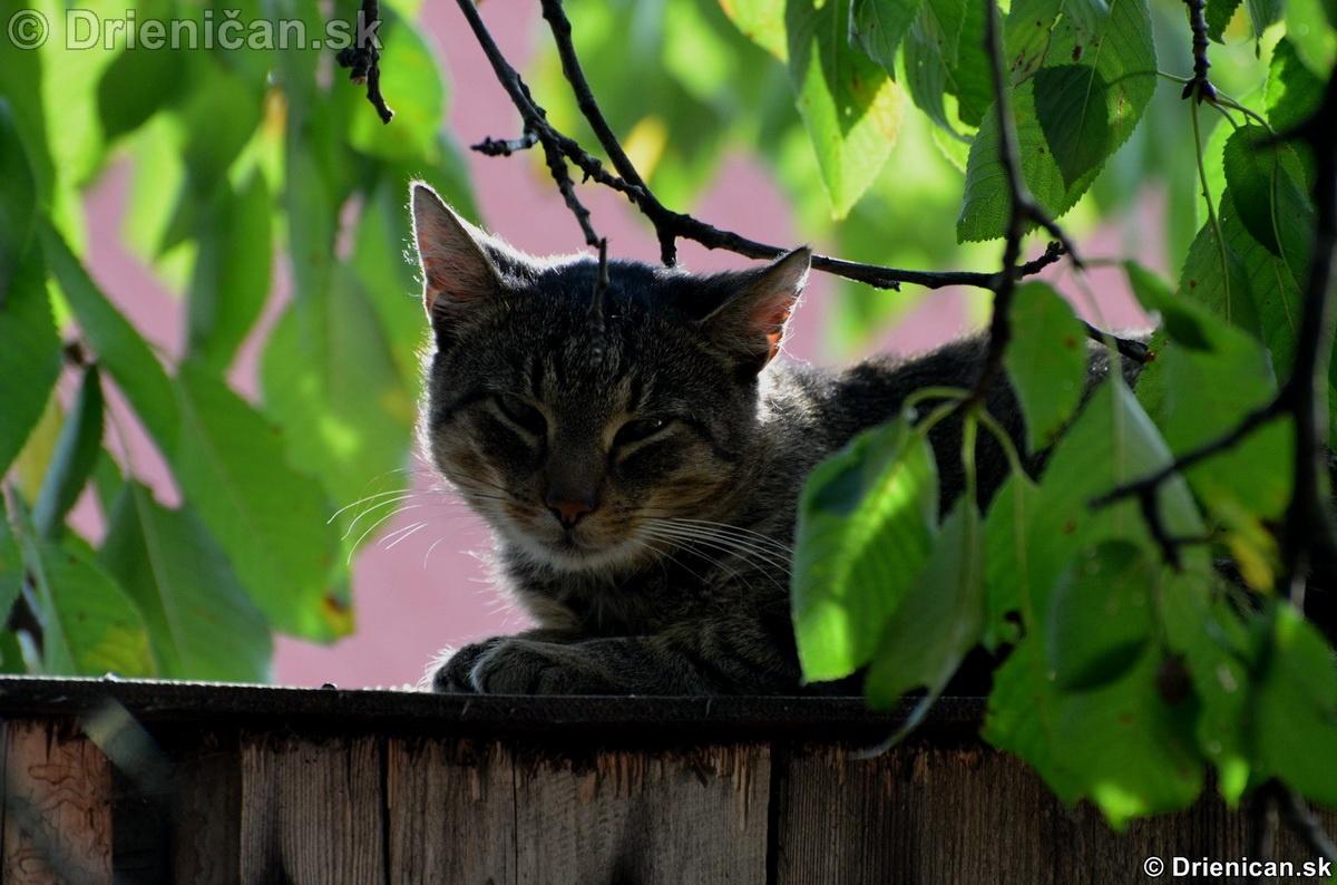 Posledné teplé slnečné lúče, aj MuRo zohreje kožúšok...
