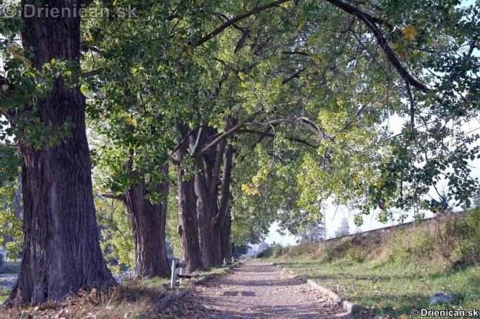 Alej a lavičky pod topoľmi. Prechádzka popri Toryse je ozaj krásna.