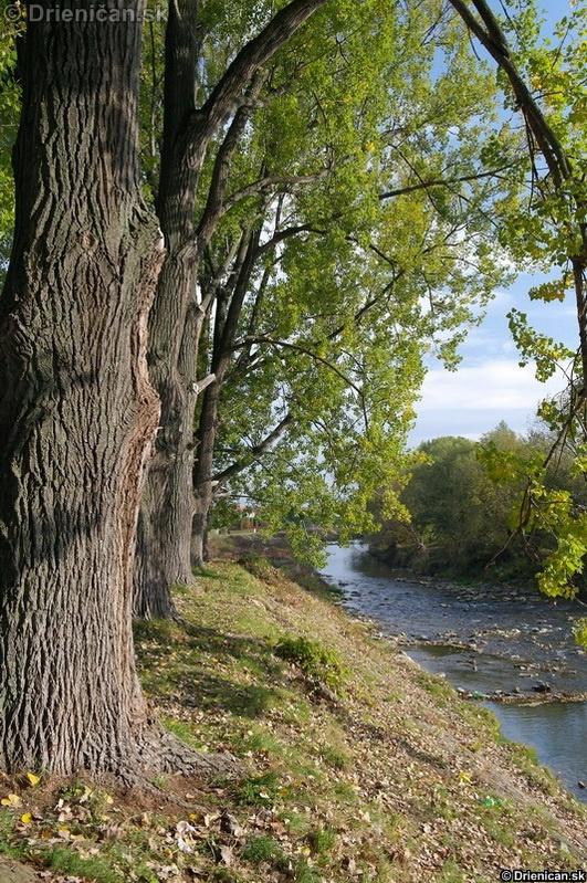 Rieka Torysa preteká nižšie okolo záhradkárskej oblasti naľavo.