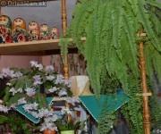 Schlumbergera Truncata - Vianočný Kaktus biely