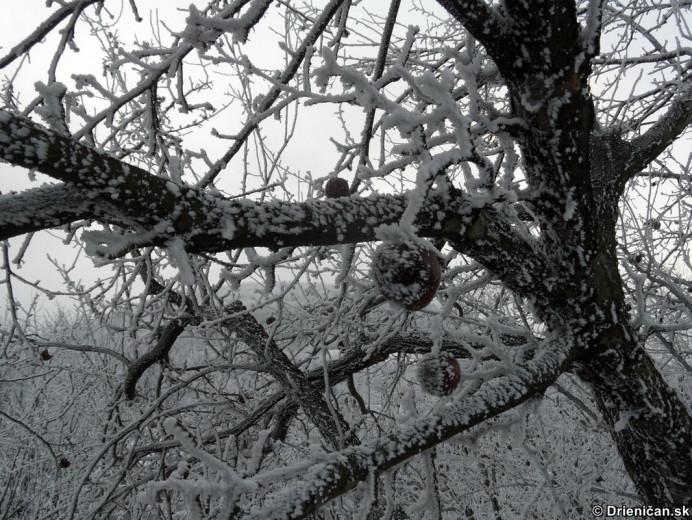 Námraza na stromoch