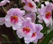 Výstava orchideí