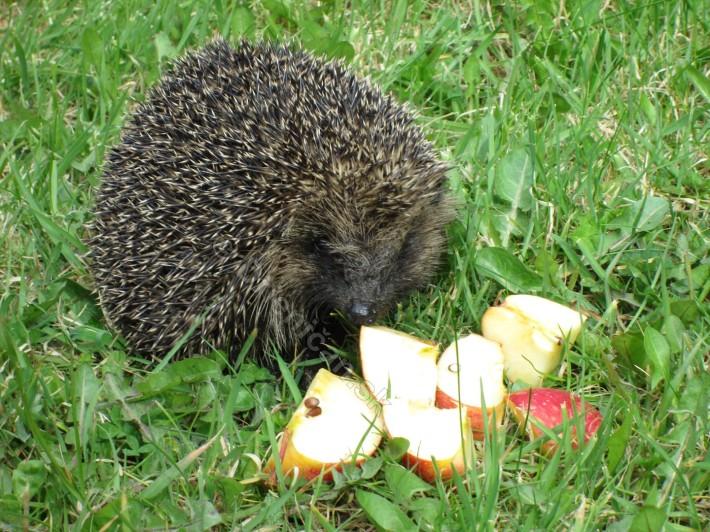 hmmm, teraz v jari jablká ?