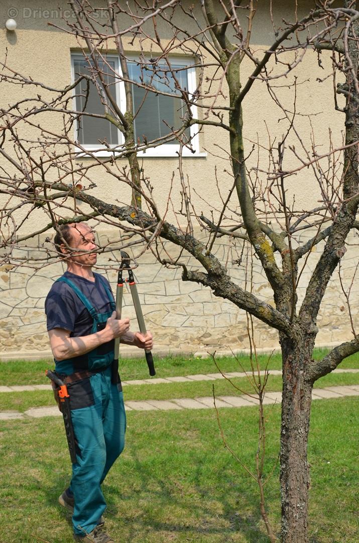 jarny rez ovocnych drevin zahradkari drienica_02