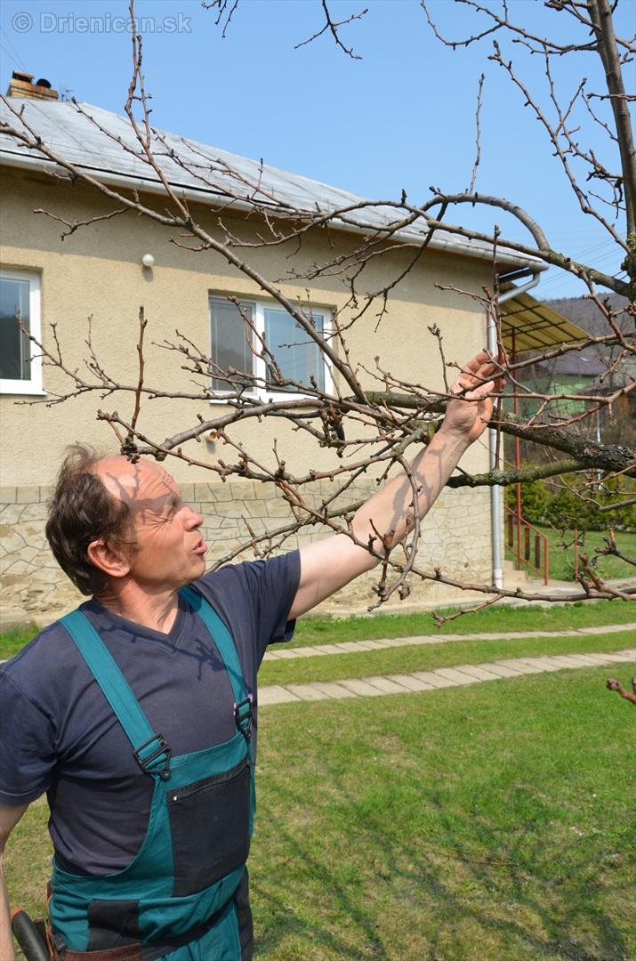 jarny rez ovocnych drevin zahradkari drienica_04