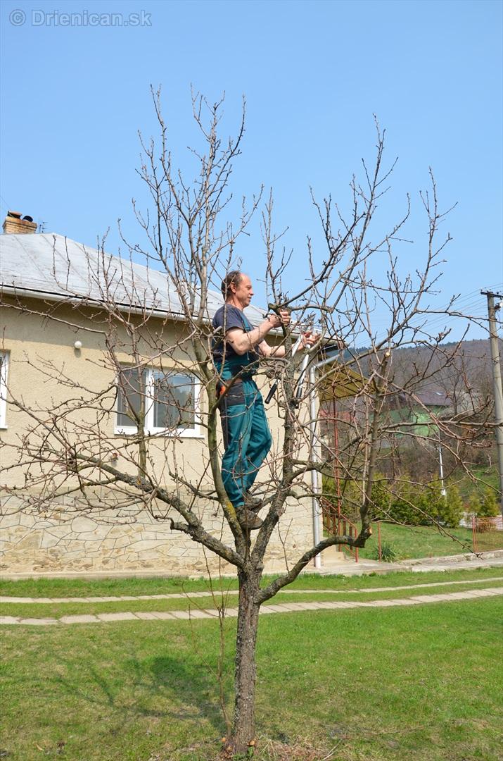 jarny rez ovocnych drevin zahradkari drienica_08