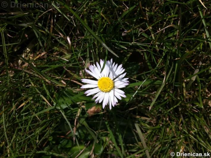 Prvé jarné kvety-poslovia jari