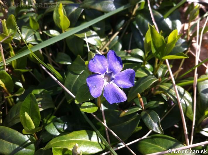 prve jarne kvety-poslovia jari_03