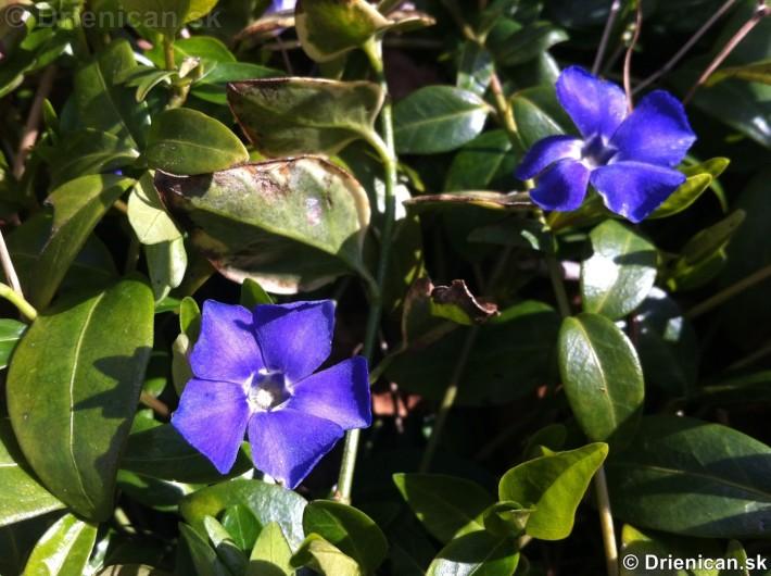 prve jarne kvety-poslovia jari_04