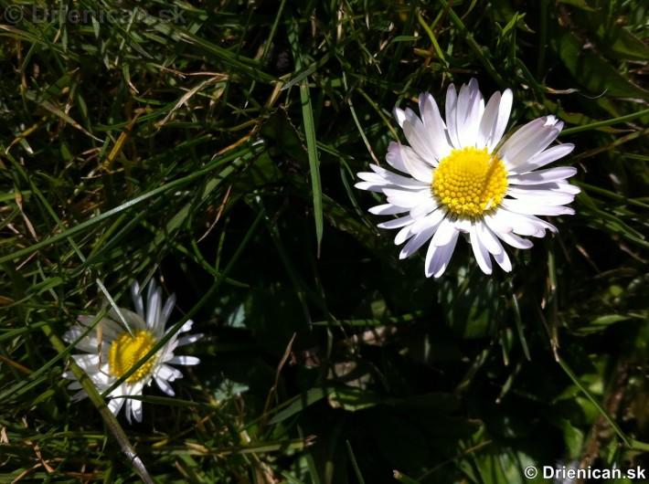 prve jarne kvety-poslovia jari_05