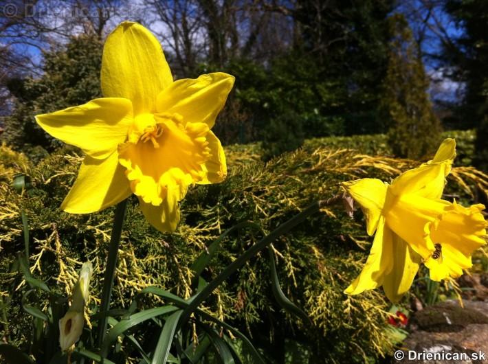 prve jarne kvety-poslovia jari_06