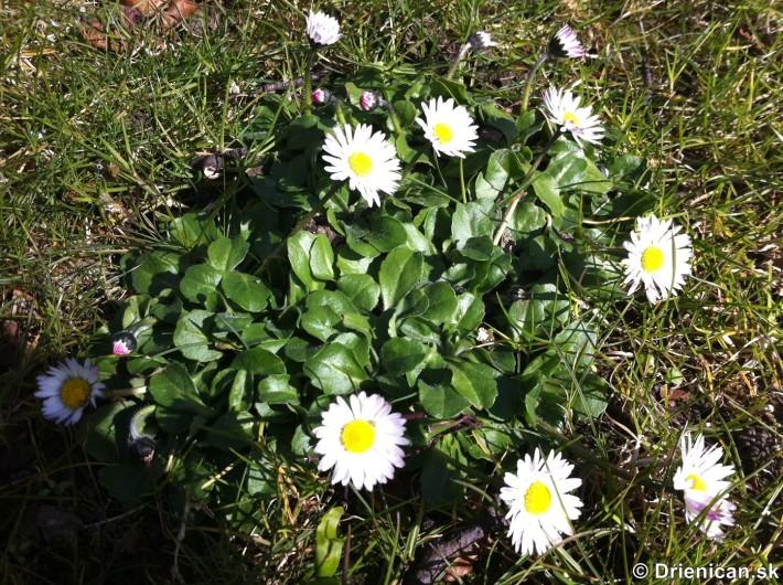 prve jarne kvety-poslovia jari_07