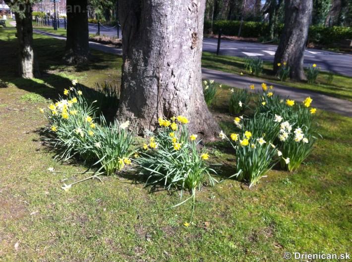 prve jarne kvety-poslovia jari_08