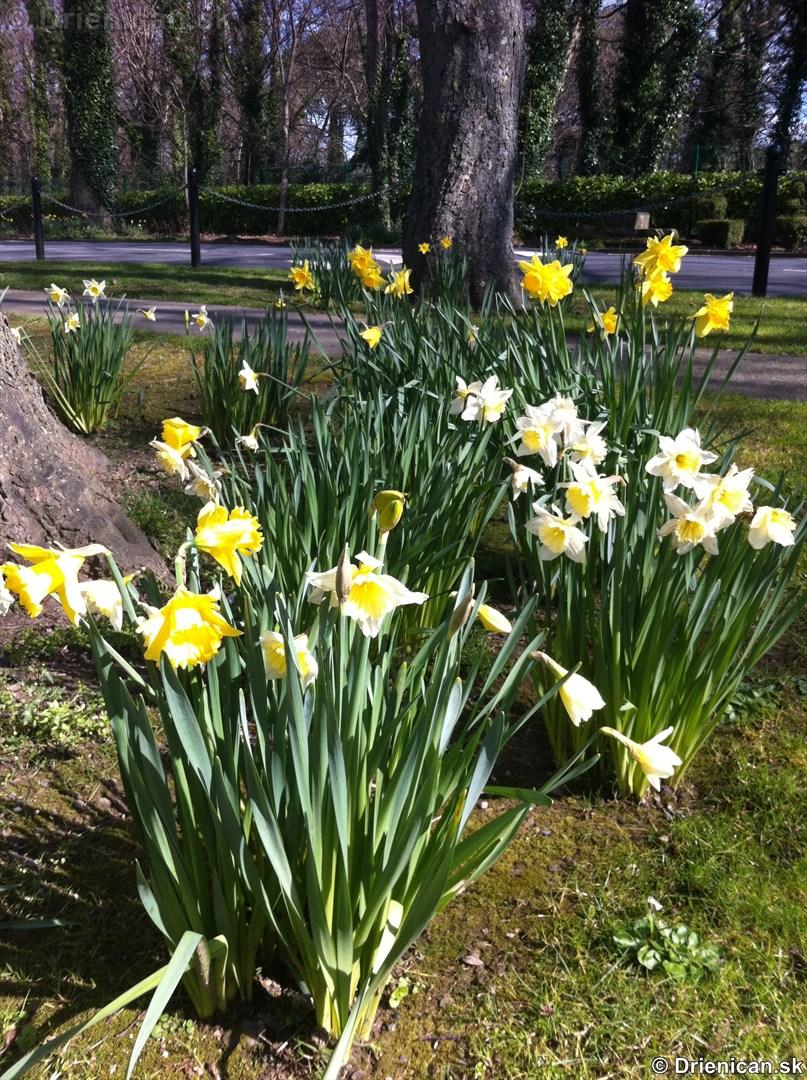 prve jarne kvety-poslovia jari_09