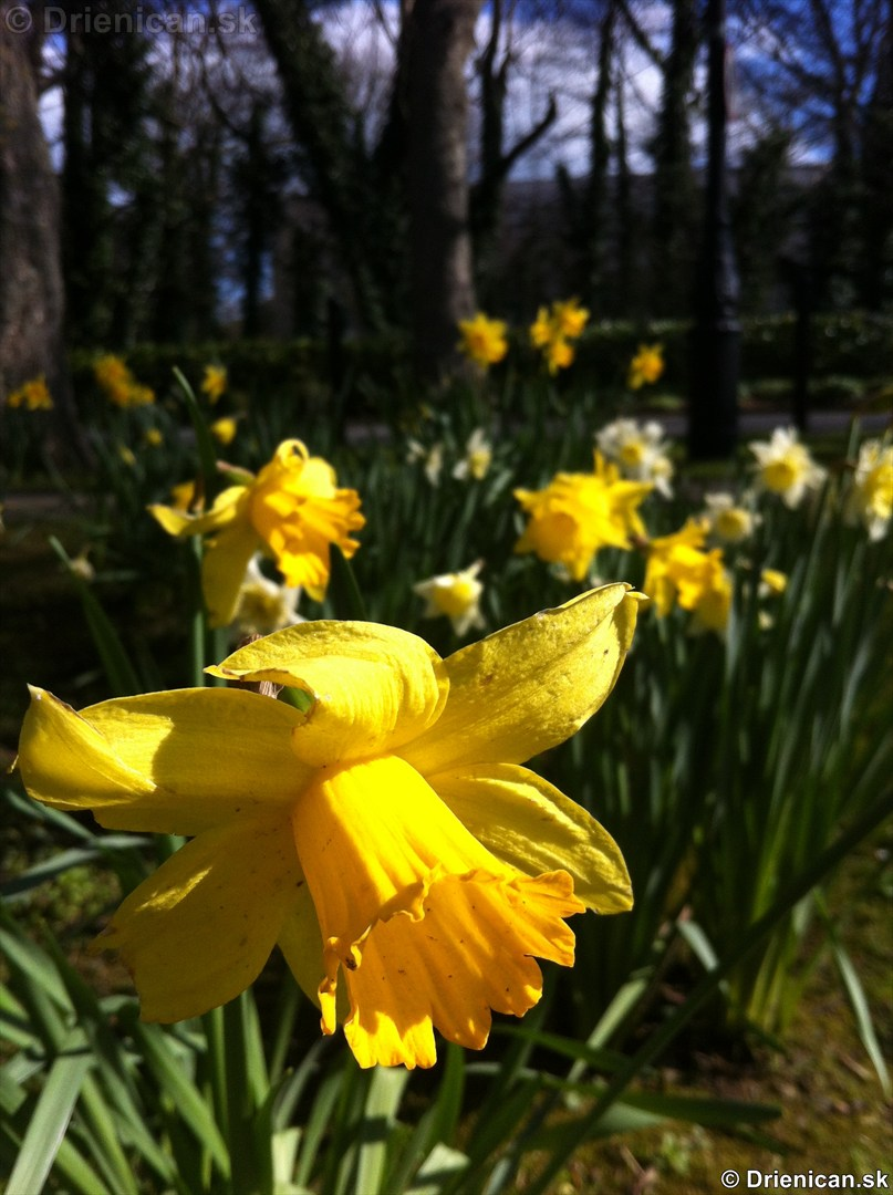 prve jarne kvety-poslovia jari_11