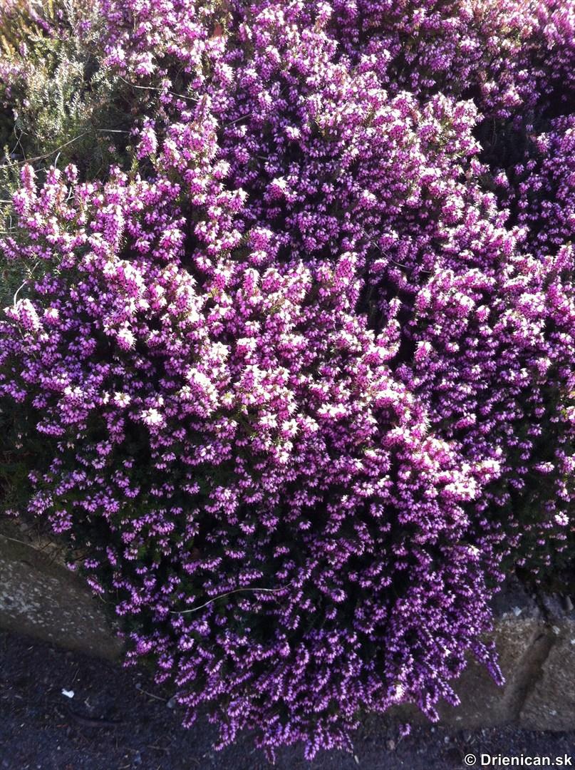 prve jarne kvety-poslovia jari_14