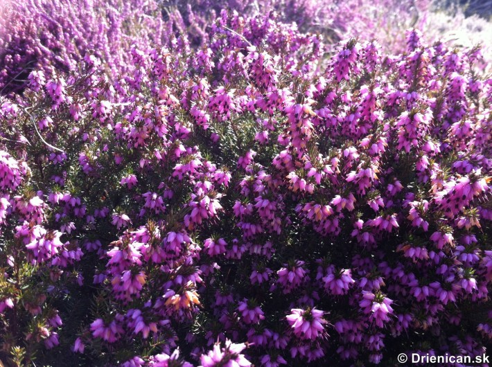 prve jarne kvety-poslovia jari_15