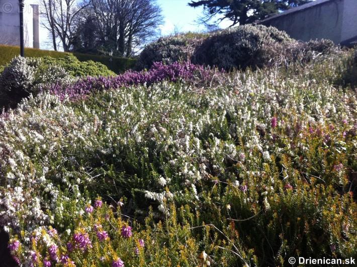 prve jarne kvety-poslovia jari_16
