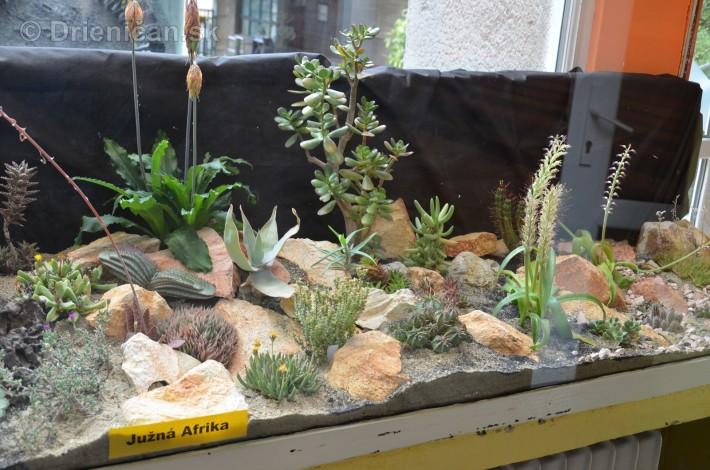 Kaktusy v botanickej zahrade kosice_002