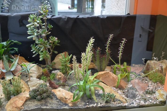 Kaktusy v botanickej zahrade kosice_003