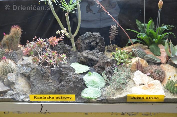 Kaktusy v botanickej zahrade kosice_004