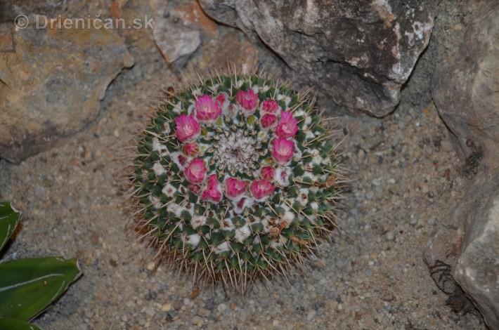 Kaktusy v botanickej zahrade kosice_005