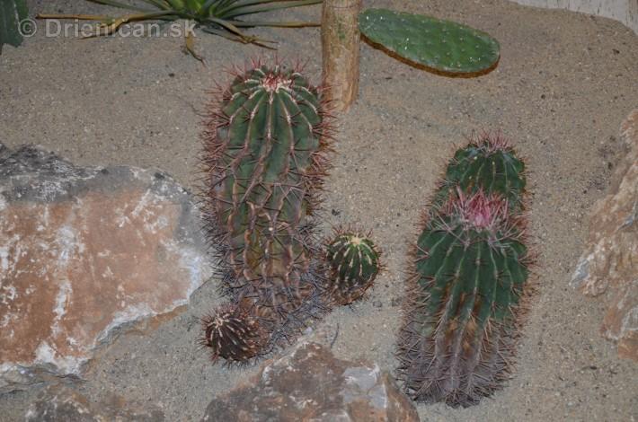 Kaktusy v botanickej zahrade kosice_008