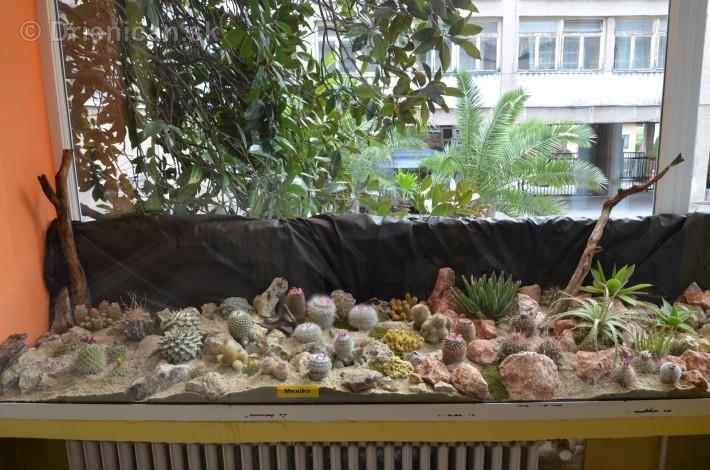 Kaktusy v botanickej zahrade kosice_012