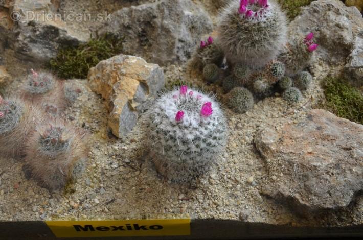 Kaktusy v botanickej zahrade kosice_013