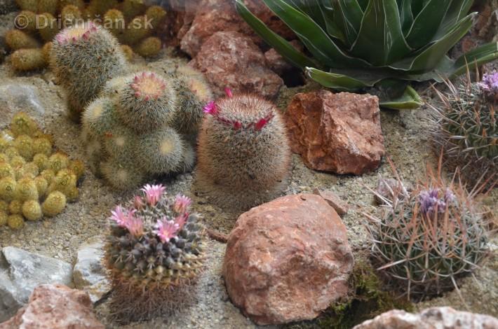 Kaktusy v botanickej zahrade kosice_015