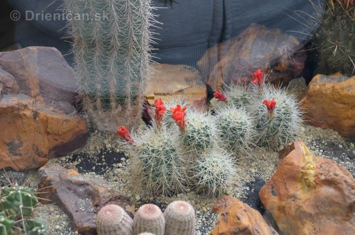 Kaktusy v botanickej zahrade kosice_017