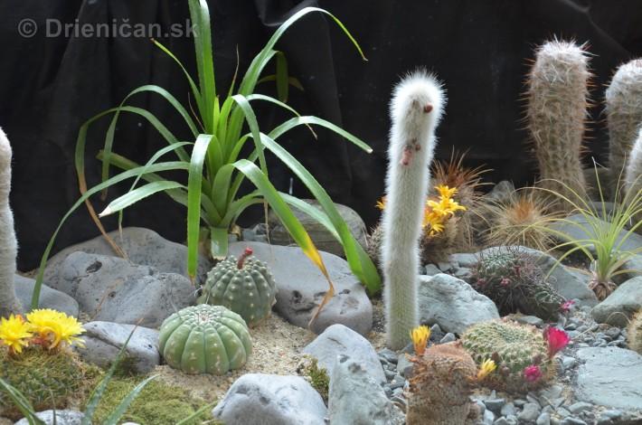 Kaktusy v botanickej zahrade kosice_018