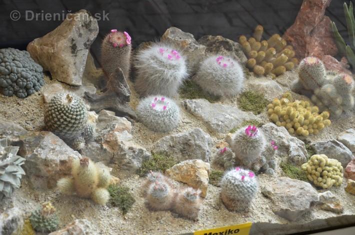 Kaktusy v botanickej zahrade kosice_019