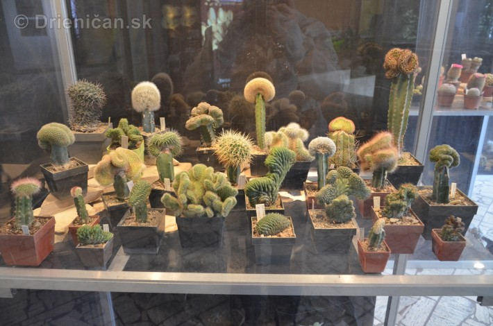 Kaktusy v botanickej zahrade kosice_021