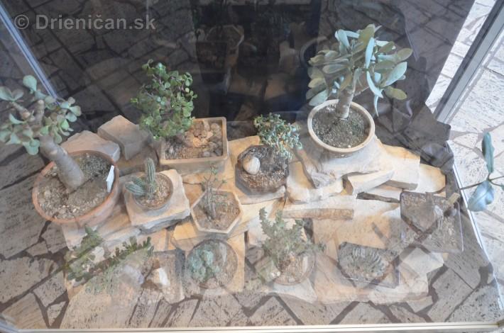 Kaktusy v botanickej zahrade kosice_022