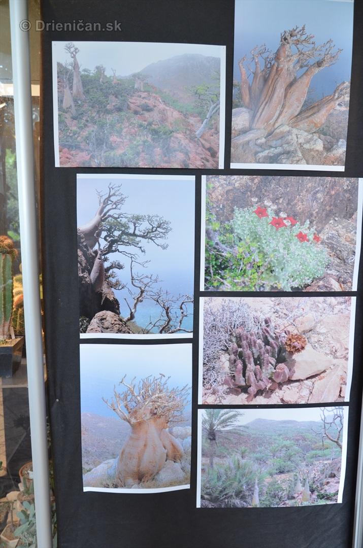 Kaktusy v botanickej zahrade kosice_023