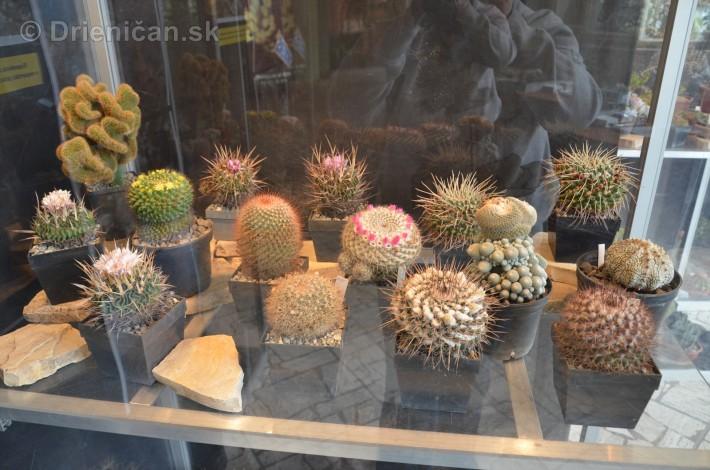 Kaktusy v botanickej zahrade kosice_026