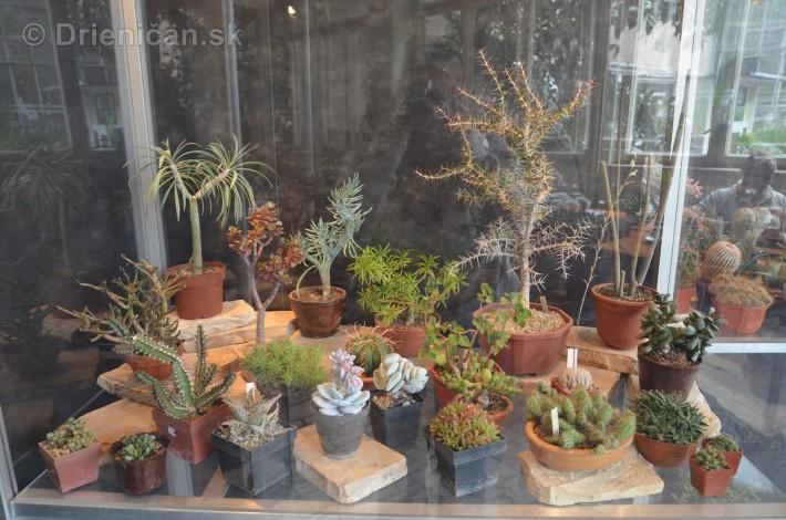 Kaktusy v botanickej zahrade kosice_027