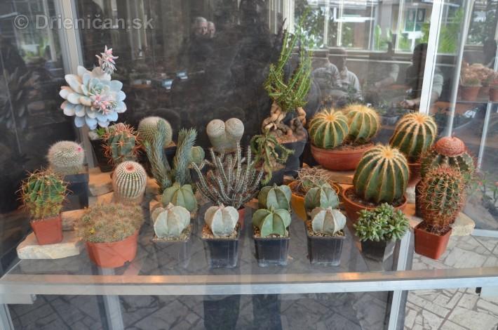 Kaktusy v botanickej zahrade kosice_028