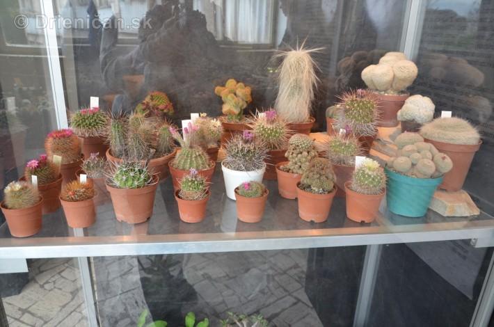 Kaktusy v botanickej zahrade kosice_029