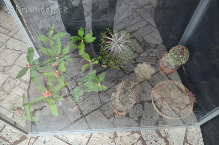Kaktusy v botanickej zahrade kosice_030