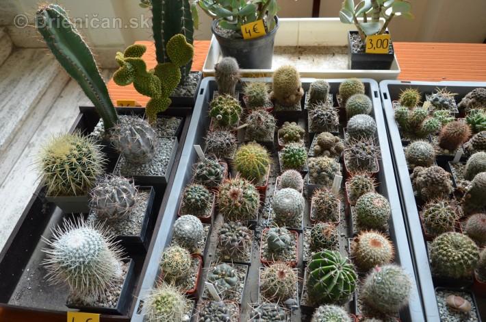 Kaktusy v botanickej zahrade kosice_032