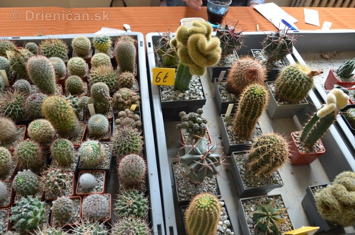 Kaktusy v botanickej zahrade kosice_033