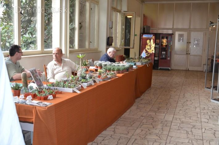 Kaktusy v botanickej zahrade kosice_035